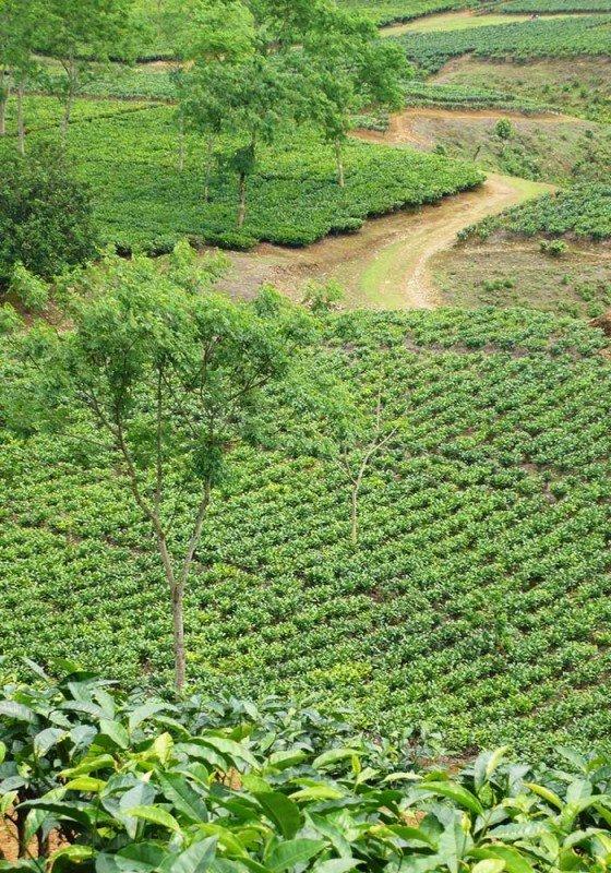 media/image/Assam-POVlTgAIjmN8dB83l1q6p1V1UuhVy.jpg