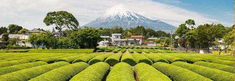 media/image/JapanTea.jpg