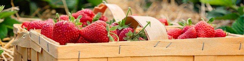 media/image/listing-banner-erdbeeren-1200x300.jpg