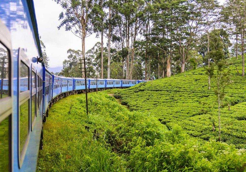 media/image/Ceylon-Tee6Cu7eQLTgV7E6p3yA3UtIq4my8.jpg